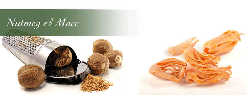 BM Uniproducts BV | Our products - Nutmeg & Mace